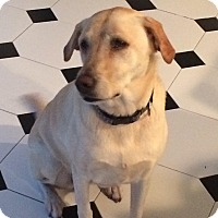 Adopt A Pet :: Molly - Surrey, BC