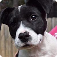 Adopt A Pet :: Quinn - Greensboro, GA