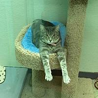 Adopt A Pet :: Olivia - Euless, TX