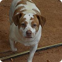 Adopt A Pet :: Noodle - hartford, CT