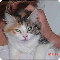 Adopt A Pet :: Gypsy - Pendleton, OR