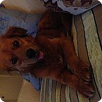 Adopt A Pet :: Minnie - Yorktown, VA