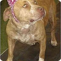 Adopt A Pet :: Fat Boy - Fowler, CA