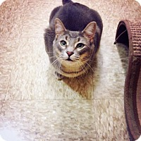 Adopt A Pet :: Marco - Chesterfield Township, MI
