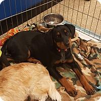 Adopt A Pet :: Newman - Temecula, CA