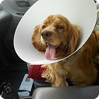 Adopt A Pet :: Cooper -Adopted! - Kannapolis, NC