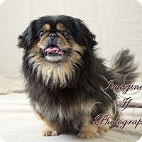 Adopt A Pet :: Toby - Oklahoma City, OK