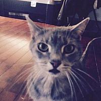 Adopt A Pet :: Nimh (courtesy posting) - Harrisburg, PA