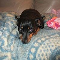 Adopt A Pet :: Molly & Marnie - Newtown, PA