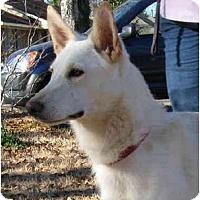 Adopt A Pet :: Dusty - Pike Road, AL