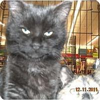 Adopt A Pet :: William - Riverside, RI