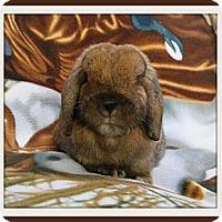 Adopt A Pet :: Archie - Williston, FL