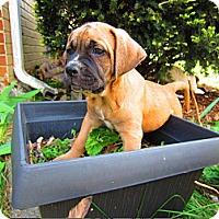 Adopt A Pet :: Aiden - Alexandria, VA
