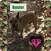 Adopt A Pet :: Buster Brown - Fowler, CA