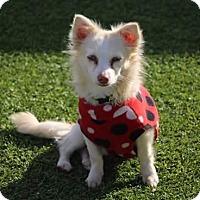 Adopt A Pet :: Puppy Puppy - Creston, CA