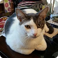 Adopt A Pet :: Travis - Maryville, TN