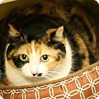 Domestic Shorthair Cat for adoption in West Des Moines, Iowa - Pella