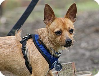 Terrier (Unknown Type, Small) Mix Dog for adoption in Ocean Springs, Mississippi - Robbins