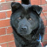 Adopt A Pet :: Cub - Harrison, NY