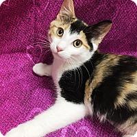 Adopt A Pet :: Kyna - Kinda Sweet, Kinda Cute - Plano, TX