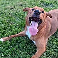 Adopt A Pet :: Charlie Lou - Jarrell, TX