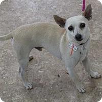 Adopt A Pet :: Pogo - Clear Lake, IA