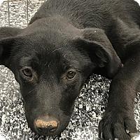 Adopt A Pet :: Ruthila - Tucson, AZ