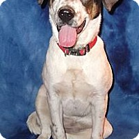 Adopt A Pet :: Dolly - Hendersonville, TN