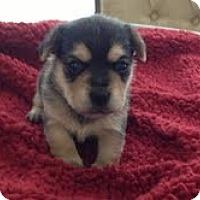 Adopt A Pet :: Jake - Yakima, WA