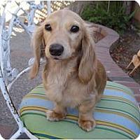 Adopt A Pet :: Cecelia - San Jose, CA