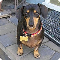 Adopt A Pet :: Cassie - San Jose, CA