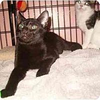 Adopt A Pet :: Enzo - Bedford, MA