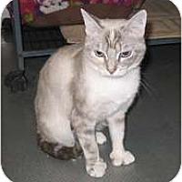 Adopt A Pet :: Bea - Shelton, WA