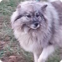 Adopt A Pet :: Savanna Smiles - Brattleboro, VT