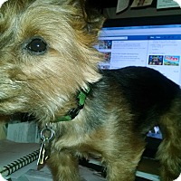 Adopt A Pet :: Arthur - South Amboy, NJ
