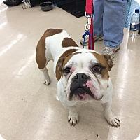 Adopt A Pet :: Cashew - Richmond, VA