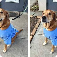 Adopt A Pet :: Kasper - Baden, PA