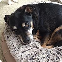 Adopt A Pet :: Mr. Frankie - Marietta, GA