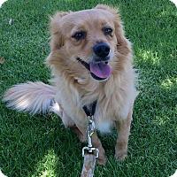 Adopt A Pet :: Cucumber - Mission Viejo, CA