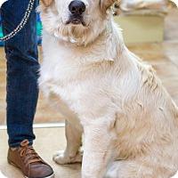 Adopt A Pet :: Farley - Rigaud, QC