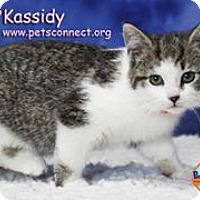 Adopt A Pet :: Kassidy - South Bend, IN