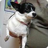 Adopt A Pet :: Precious - Aurora, IL