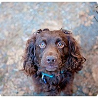 Adopt A Pet :: Babar - Seattle c/o Kingston 98346/ Washington State, WA