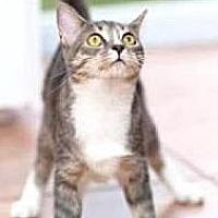 Adopt A Pet :: Christy - Miami, FL