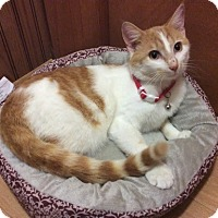 Adopt A Pet :: Oliver - Greensburg, PA