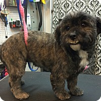 Adopt A Pet :: Chewy: Adoption Pending - Astoria, NY