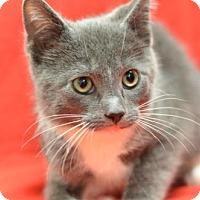 Adopt A Pet :: Gulliver170262 - Atlanta, GA