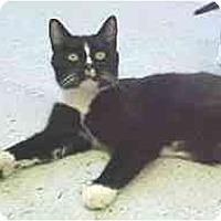 Adopt A Pet :: Debbie - Lunenburg, MA