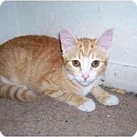 Adopt A Pet :: Georgia - Arlington, VA