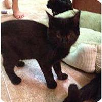 Adopt A Pet :: Denver - Mobile, AL